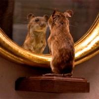 """""""Specchio specchio delle mie brame"""". Quando un sito web ti rivela l'età."""