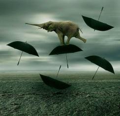 elefante-che-vola-su-ombrelli.jpg