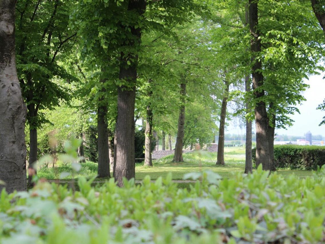 Sona, un marzo tra boschi in comodato d'uso, l'INPS in Comune e i lavoratori daltribunale