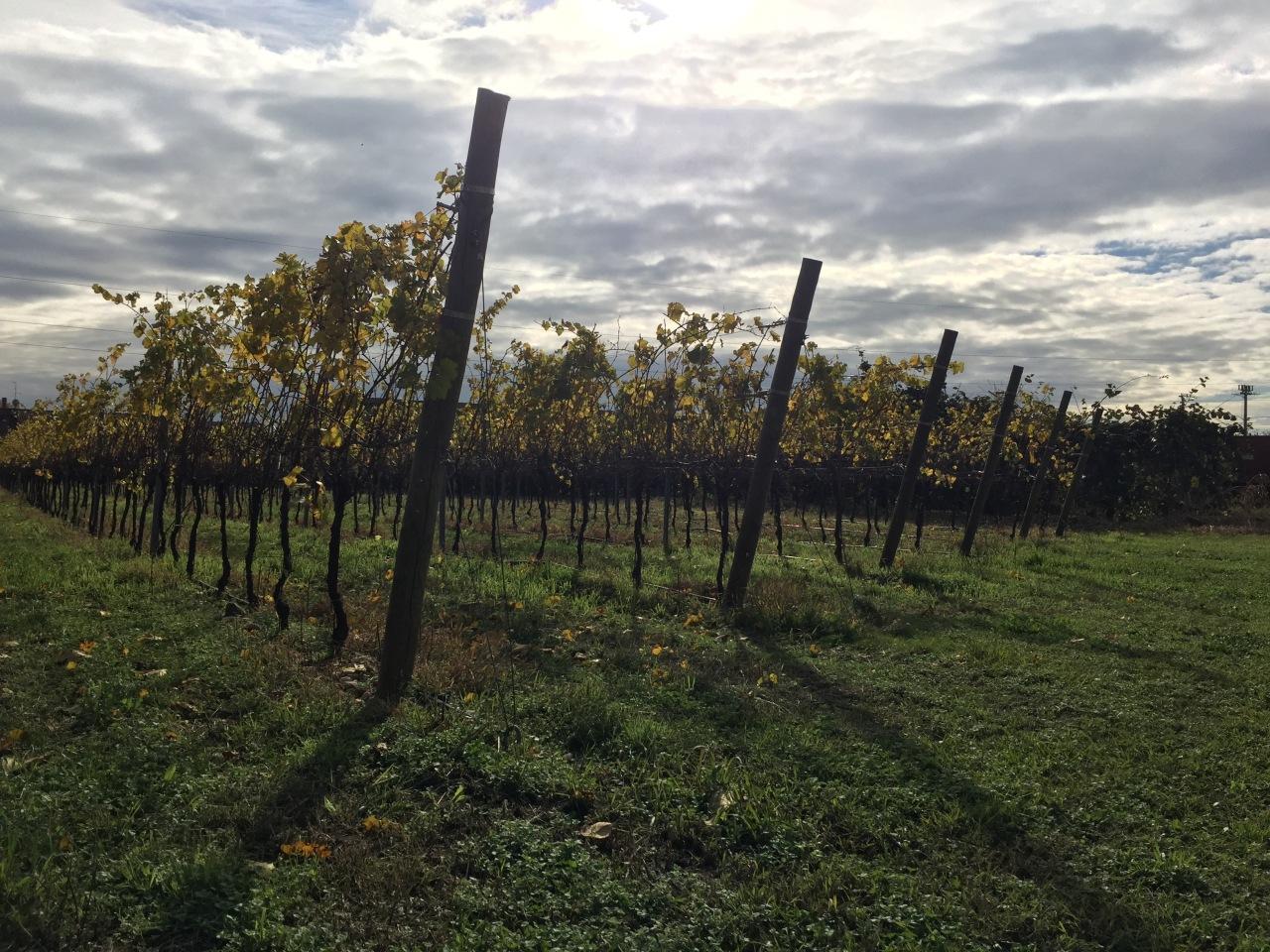 """""""Il profumo delle foglie delle viti in autunno"""". La sorprendente esperienza dellalentezza"""